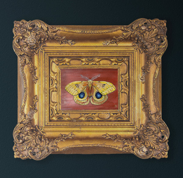 Io Moth painting in ornate gold frame by Aimee Schreiber