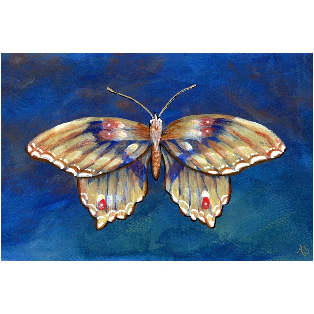 Afternoon Indigo Butterfly Canvas Fine Art Print