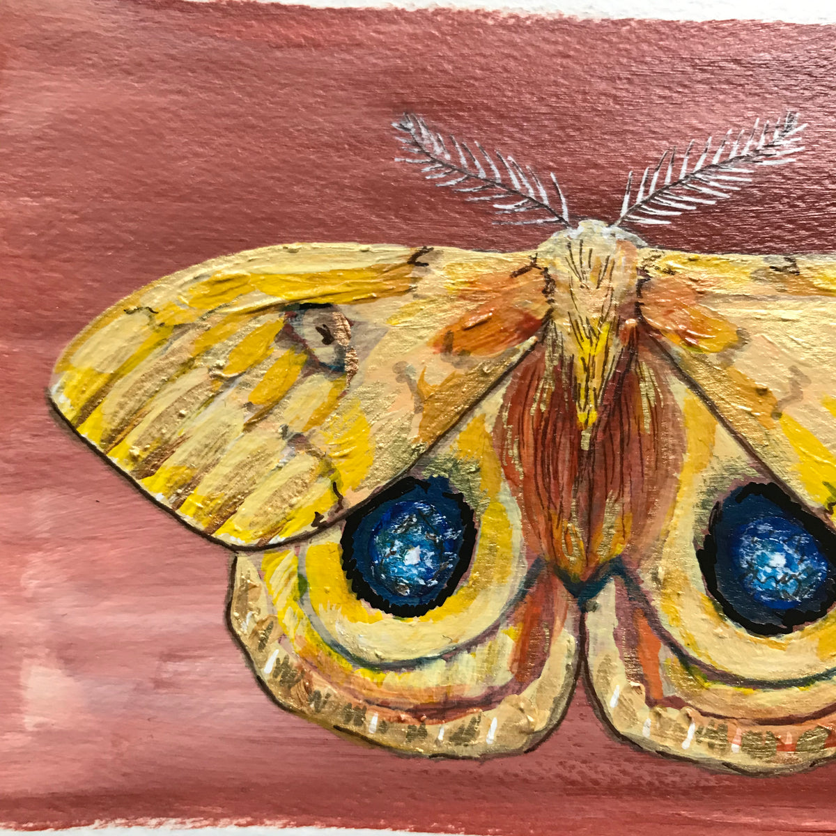 Detail Yellow Io Moth acrylic painting by Aimee Schreiber