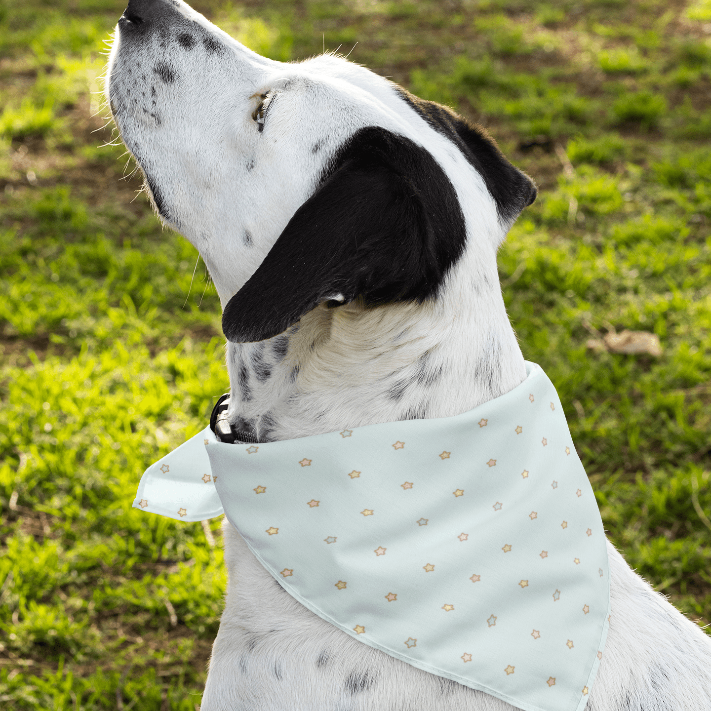 Multicolor Blue Star Dog Bandana - With or Without Collar