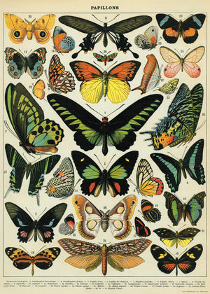Vintage Butterflies Poster