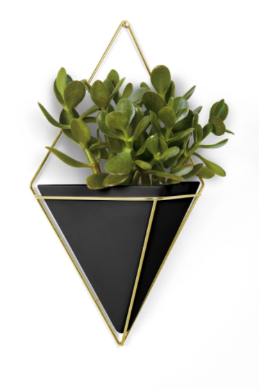 Trigg Large Wall Display Black & Brass