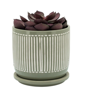 "6"" Sage Stripe Planter with Saucer"
