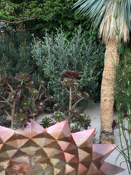 Succulents, agaves and aloes