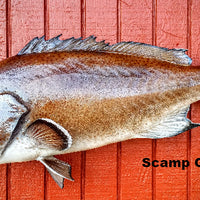 Scamp Grouper  40 x 25