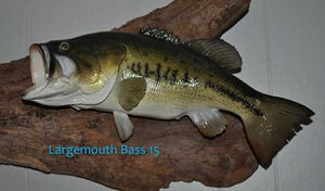 Largemouth Bass 15 -- 20 1/2 x 15 1/4