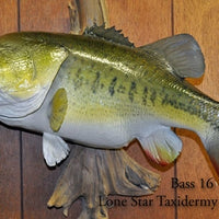 Largemouth Bass 16 -- 25 1/2 x 19 1/2