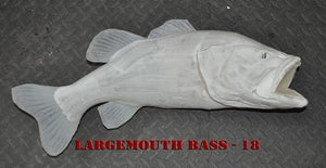 Largemouth Bass 18 -- 24 x 16 1/2