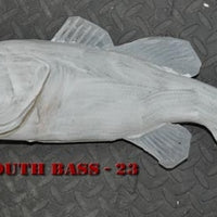 Largemouth Bass 23 -- 20 x 13 1/4