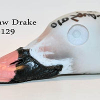 Old Squaw Drake Painted Head