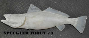 Speckled Trout 73 -- 25 x 14 1/2