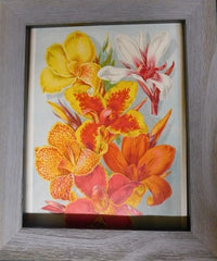 1880s print - New French Cannas