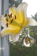 Suction cup bud vase