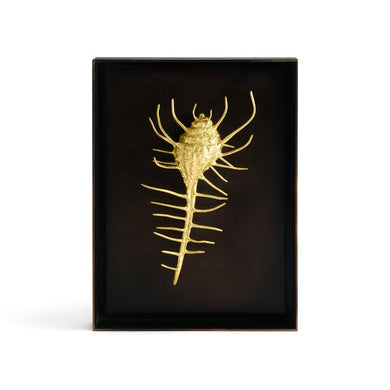 Venus Comb Shell Shadow Box - By Michael Aram