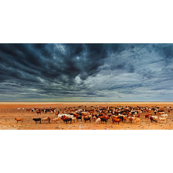 Stormy skies over Brahman cattle drinking at a water trough in central Australia.