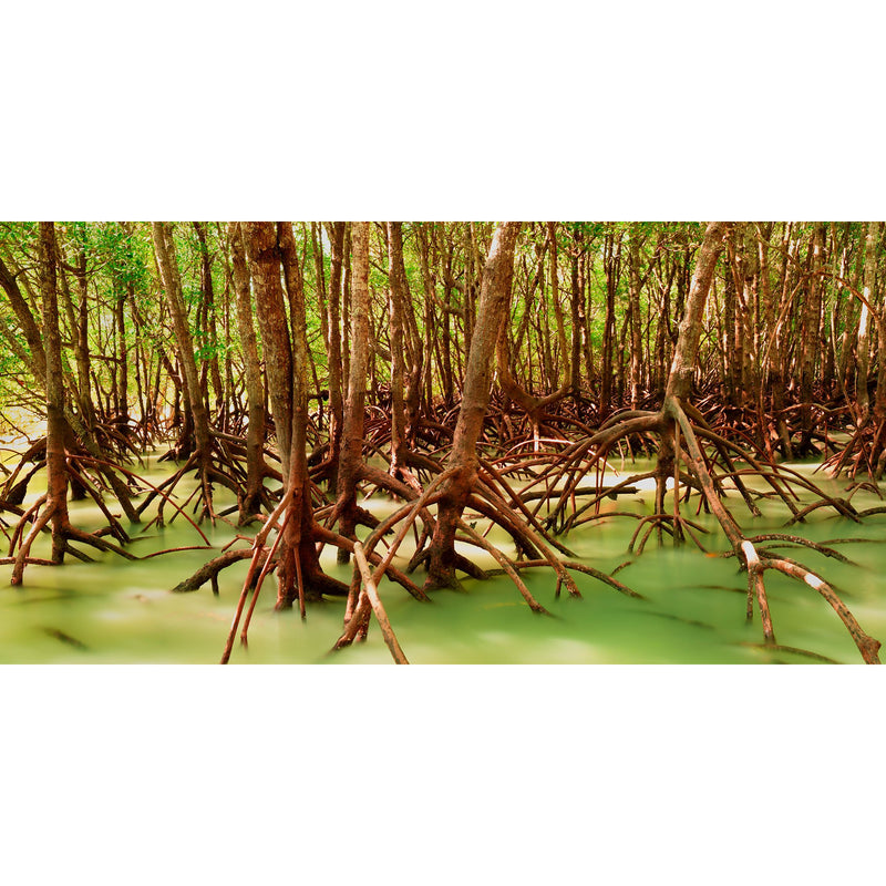 Mangrove roots stand tall as the tide rises around them