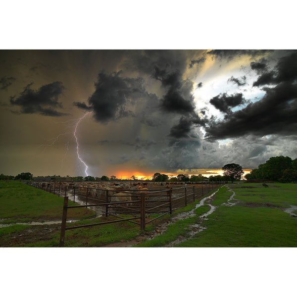 Lightning strikes out of a storm cell over a cattle yard