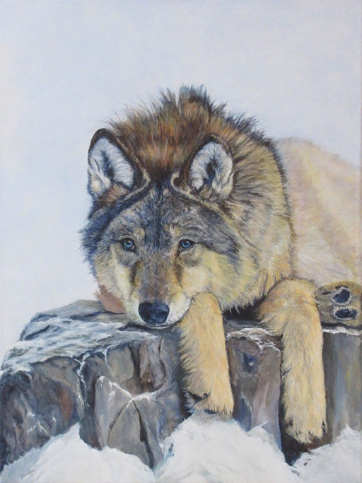 ALGONQUIN WOLF - Artfest Ontario - BC's Art Studio - Paintings