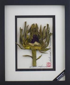 Artichoke Heart Vegetable Shadow Box - Artfest Ontario - Botanical Art By Diane - Vegetable Art