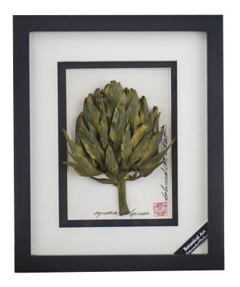 Artichoke Vegetable Shadow Box - Artfest Ontario - Botanical Art By Diane - Vegetable Art