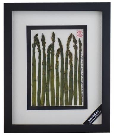 Asparagus Vegetable Shadow Box - Artfest Ontario - Botanical Art By Diane - Vegetable Art