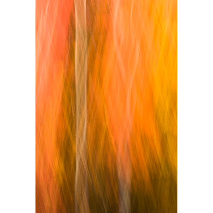 Autumn Entanglement - Artfest Ontario - Bob Gallagher Photography - Photographic Art