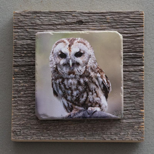 Birds Of Prey - On Barn Board 5876 - Artfest Ontario - Art On Stone - Photography