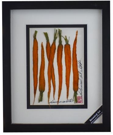 Carrots Vegetable Shadow Box - Artfest Ontario - Botanical Art By Diane - Vegetable Art