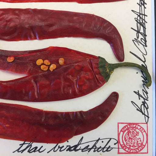 Chili Peppers 3 - Artfest Ontario - Botanical Art By Diane De Roo - Vegetable Art