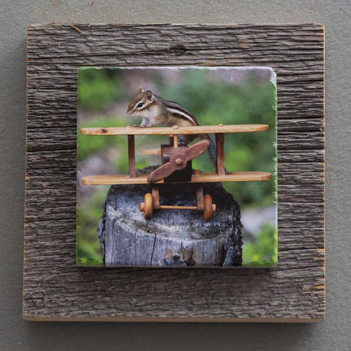 Chippy The Aviator - On Barn Board 4629 - Artfest Ontario - Art On Stone - Photography