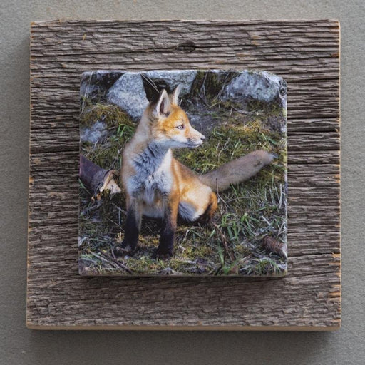 Ears Up - On Barn Board 8685 - Artfest Ontario - Art On Stone - Photography