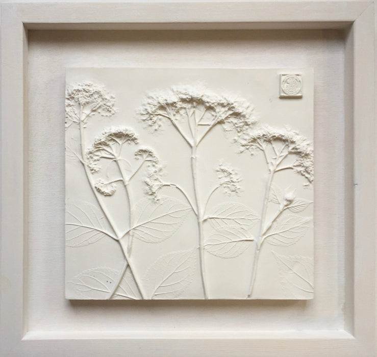 Framed Botanical Casts - Cottage White - Artfest Ontario - Botanical Art By Diane - Botanical Casts
