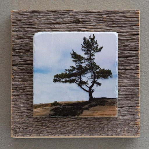 GB Pine - On Barn Board 0600 - Artfest Ontario - Art On Stone - Photography