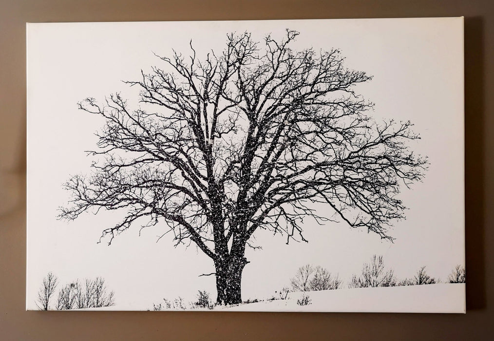 Lonely Tree - Artfest Ontario - Loretta Meyer Fine Art Photography - Photographic Art