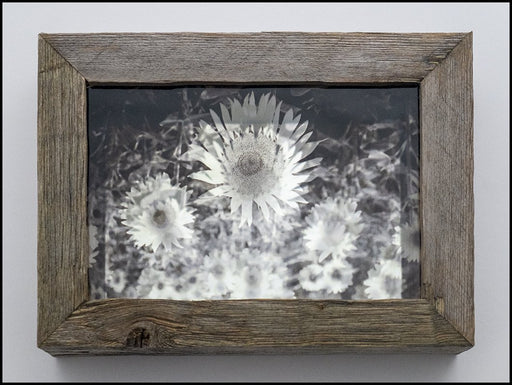 Sunflower - Mirror Box - Artfest Ontario