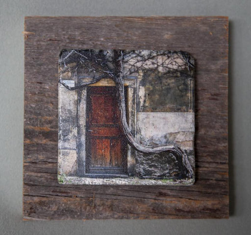 The Crooked Tree - On Barn Board 0142 - Artfest Ontario - Art On Stone - Photography