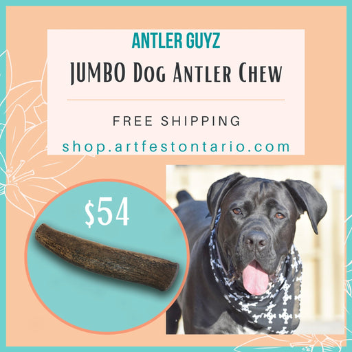 The JUMBO Antler Chew - Artfest Ontario - Antler Guyz - Pet Products