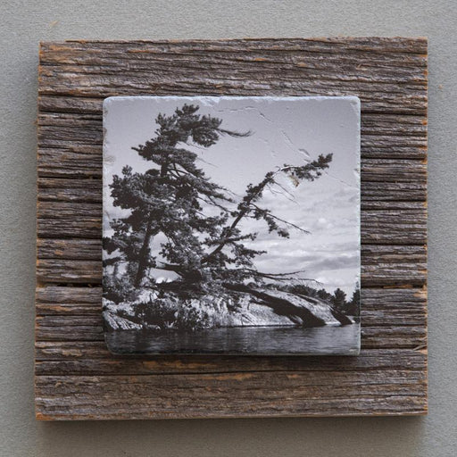 Windswept Pine B&W - On Barn Board 0846 - Artfest Ontario - Art On Stone - Photography