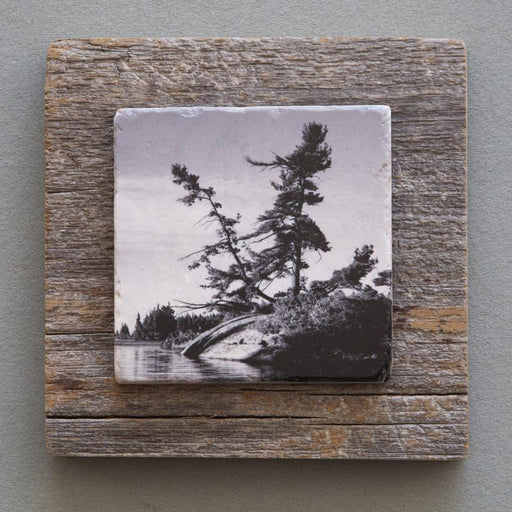 Windswept Pine B&W - On Barn Board 0848 - Artfest Ontario - Art On Stone - Photography