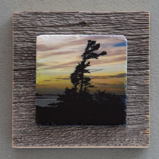 Windswept Pine - On Barn Board 0011 - Artfest Ontario - Art On Stone - Photography