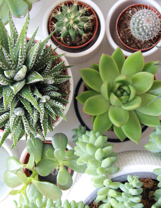 9 Plants To Reduce Stress + Increase Productivity