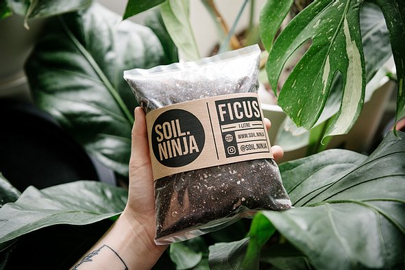 Premium Ficus Soil Mix