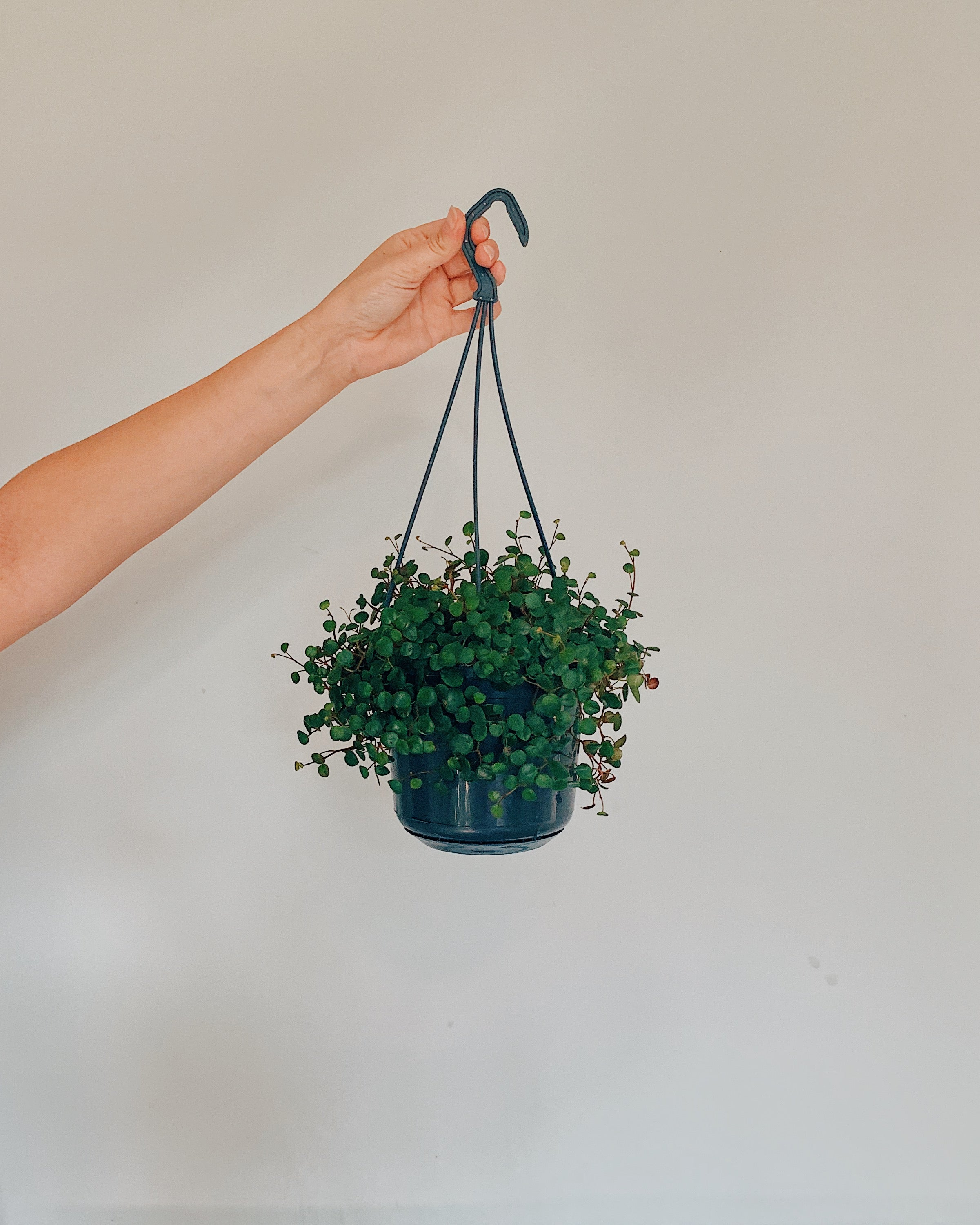Hanging String of Coins