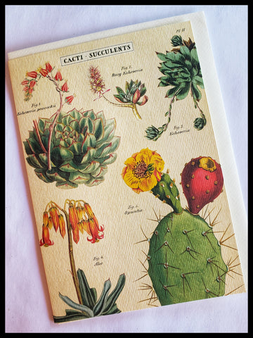 Cacti - Succulents Greeting Card