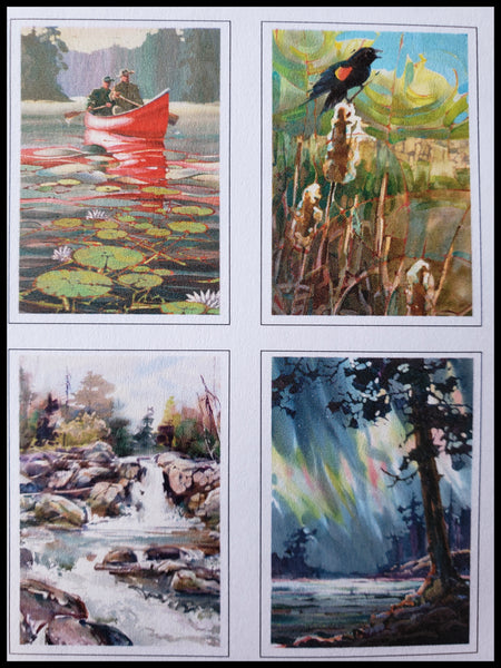 Nature Pack by Dan Wiemer Painterly Style Boxed Card 8 blank cards 2 each 4.5 x 6.5 inches Blues, yellows and greens ADA The Gilded Page Santa Fe