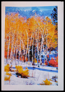 Seasons of New Mexico 8 Pack Holiday Cards