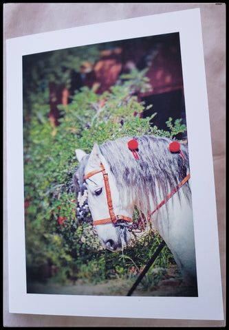 Spanish Caballo Single Card