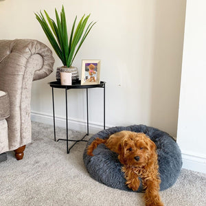 ABSOLUT SOOTHING PET BED (STOCK CLEARANCE)