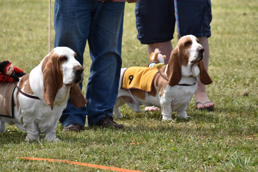 8 New Years Resolutions for You & Your Basset Hound