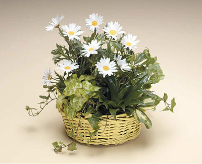 Dish Garden With Daisies